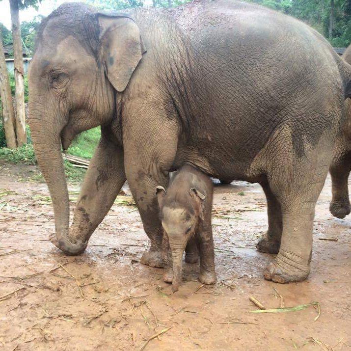 mum and baby elephant