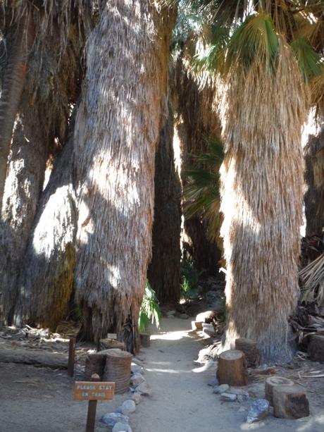 Thousand Palms Oasis Preserve  Palm Springs