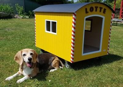 """Hundehütte """"Peter"""" by Willi-Wood, bekannt auch aus dem SAT1 Frühstücksfernsehen!"""