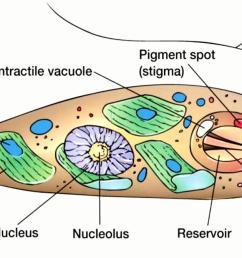 protists mr evans science website rh sites google com bacteria vs protists venn diagram bacteria vs [ 1199 x 672 Pixel ]