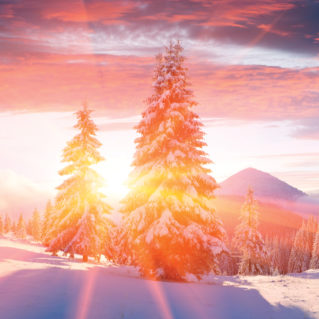 The sun shining through snow-covered evergreens