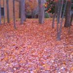 JCC Leaf Collection dates self-haul and curbside at no charge