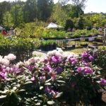 Annual Native Spring Plant Sale at Virginia Living Museum