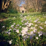 Historic Garden Week at Chippokes - April 18-25