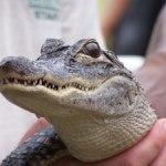 Reptiles Bizarre and Beautiful at the Virginia Living Museum