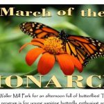 March-of-the-Monarch-williamsburg