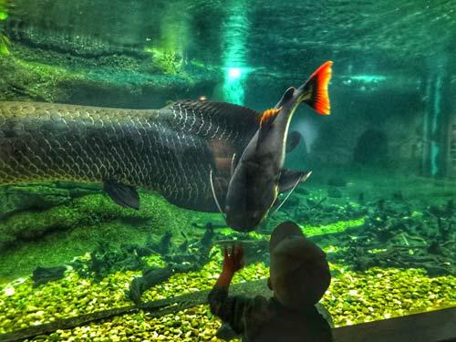 DC-aquarium-with-kids