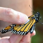 monarch tagge virginia living museum