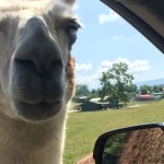 Drive-Thru Safari Park is Open and a Fun Day Trip!