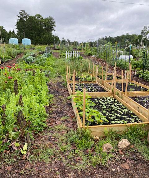 Williamsburg Community Growers