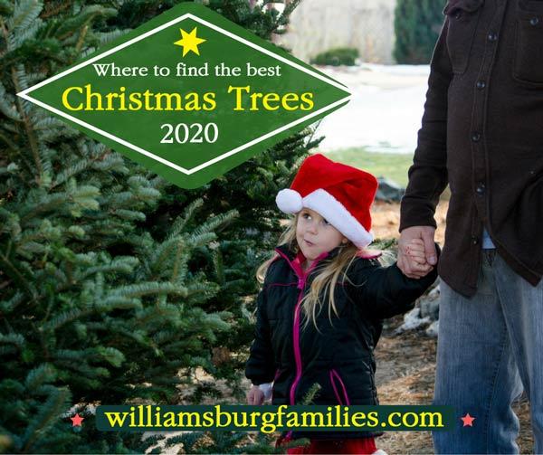 Christmas-Trees-williamsburg