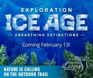 Coming in February 13 ice age vlm
