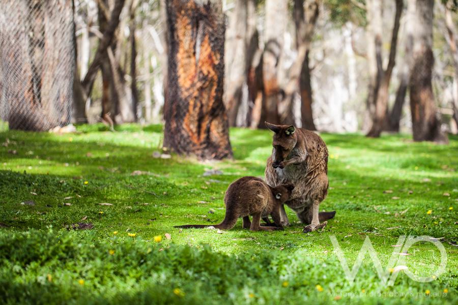 Cleland Wildlife Park  Adelaide  Queenstown Wedding