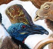 Cassowary Detail