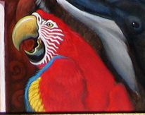 Macaw Detail