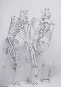 Male Chimpanzee (left) and male Orang-utan