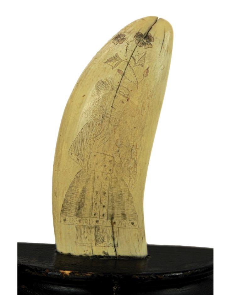 Lot 36C: 19th C. Pair of Sperm Whale's Teeth