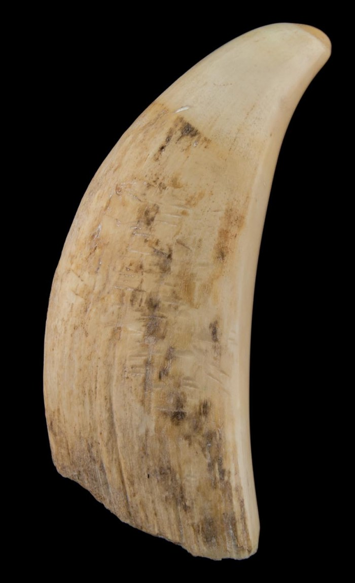 Lot 98A: Antiques Whale's Tooth