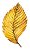autumnleaves2-100