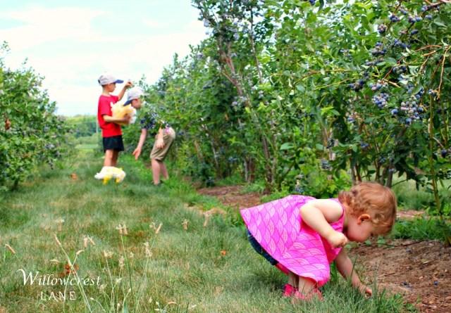 willowcrest lane norah pritchard summer recipes