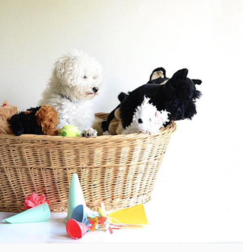 henry-in-basket-of-toys