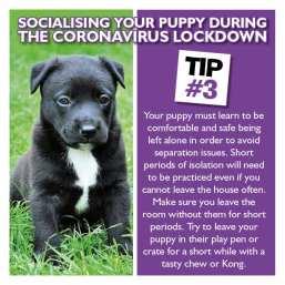 PUPPY SOCIAL 3