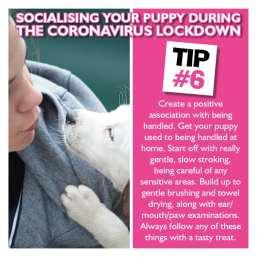 PUPPY SOCIAL 6