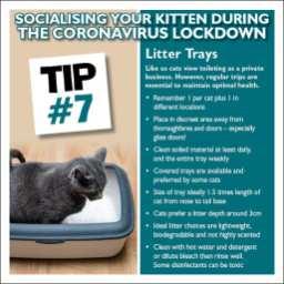 Kitten tip 7