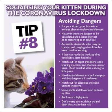 Kitten tip 8