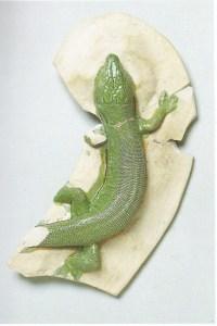 grotto lizard