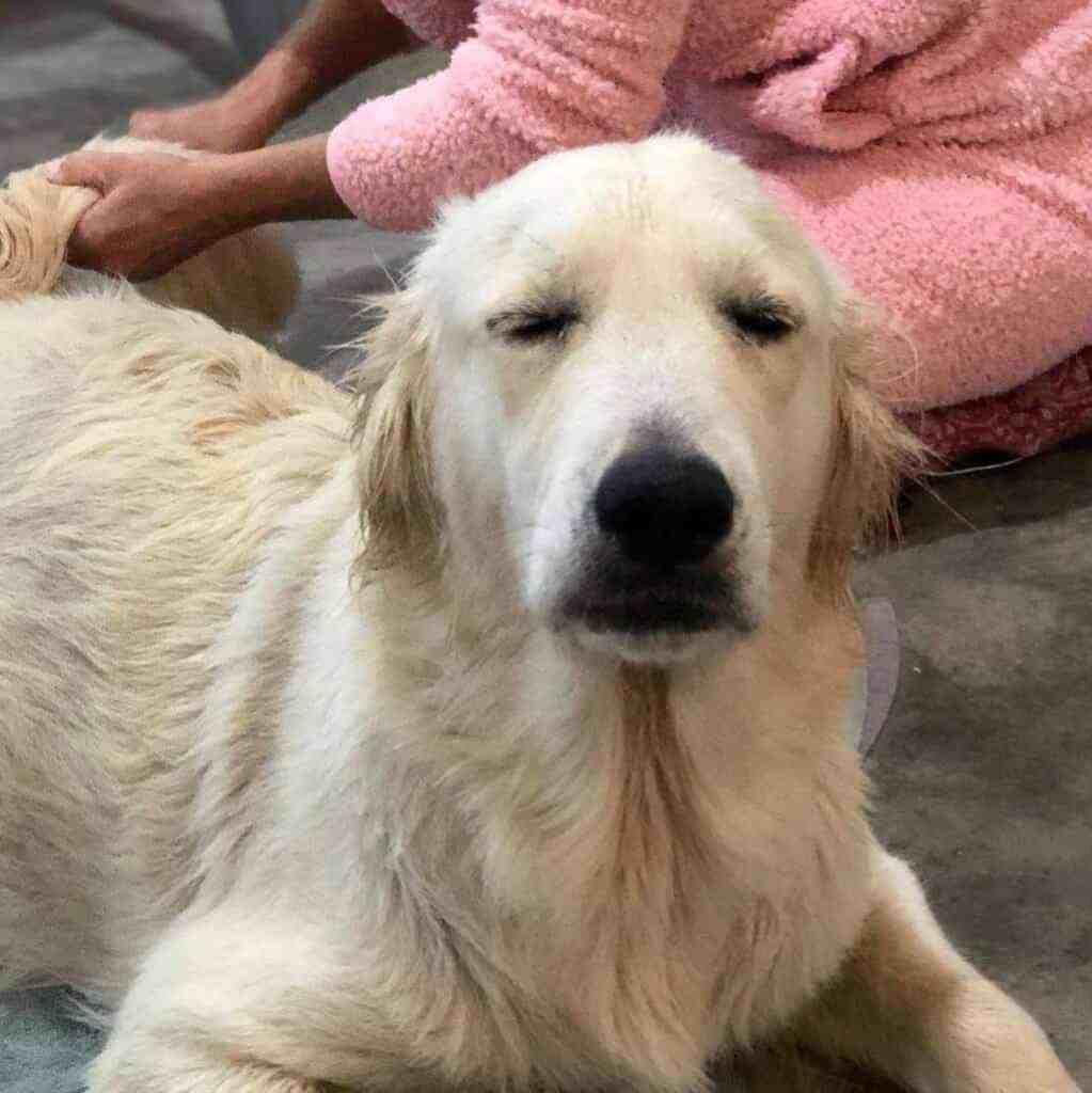 Dog at spa