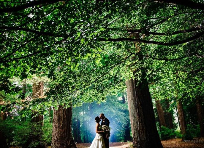 011 - trees Stanley Park Pavilion