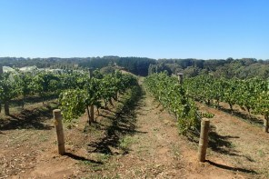 The Making Of Aphelion Wine - Part 2 - In The Vineyard