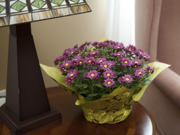 Fleurettes Willyfresh Plants