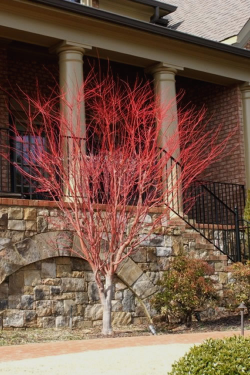 Mulch Fall Or Spring