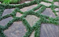 The Best Plants to Grow Between Stepping Stones & Pavers
