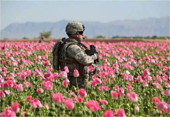 poppy soldier