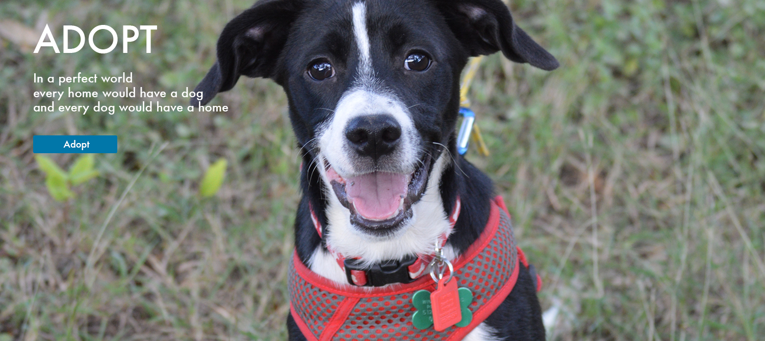 Dog and Puppy Rescue Adoption Wimberley Texas