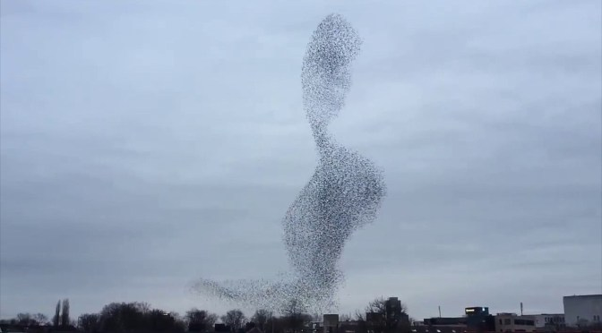 Starling Magic