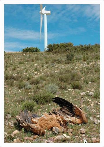 Wind turbines are killing condors  Wind Energy News