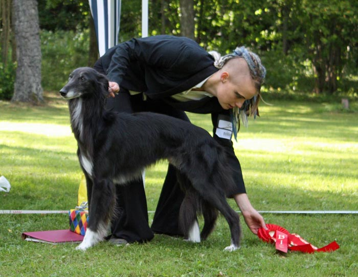SBIS SSWK W-08, W-09 Windspirit Brendan of Rennaissance with his handler Helena Håkansson