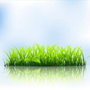 green-grass_zy1bpaiu_l