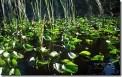 The Beautiful Everglades