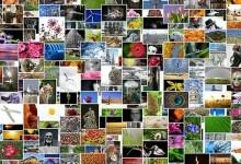 Photo of Fotos verkleinern mit Windows 10 – so geht's