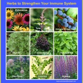 10 Natural Ways to Strengthen Your Immune System