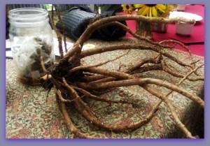 root teas