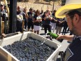 Napa Valley Harvest 2015 - Mumm Napa Winemaker Lidovic Dervin sprinkling Mumm Napa Sparkling wine on the grapes in the first press load. (Julie Santiago)