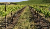 Wente Estate Vineyards (Courtesy of Wente Vineyards )