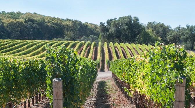 A memorable pairing with 2012 Kenzo Murasaki  #winePW