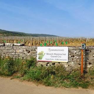 Bourgogne - Bâtard-Montrachet Grand Cru vineyard. April 2014.